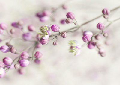 pink_flower_buds_1920x700